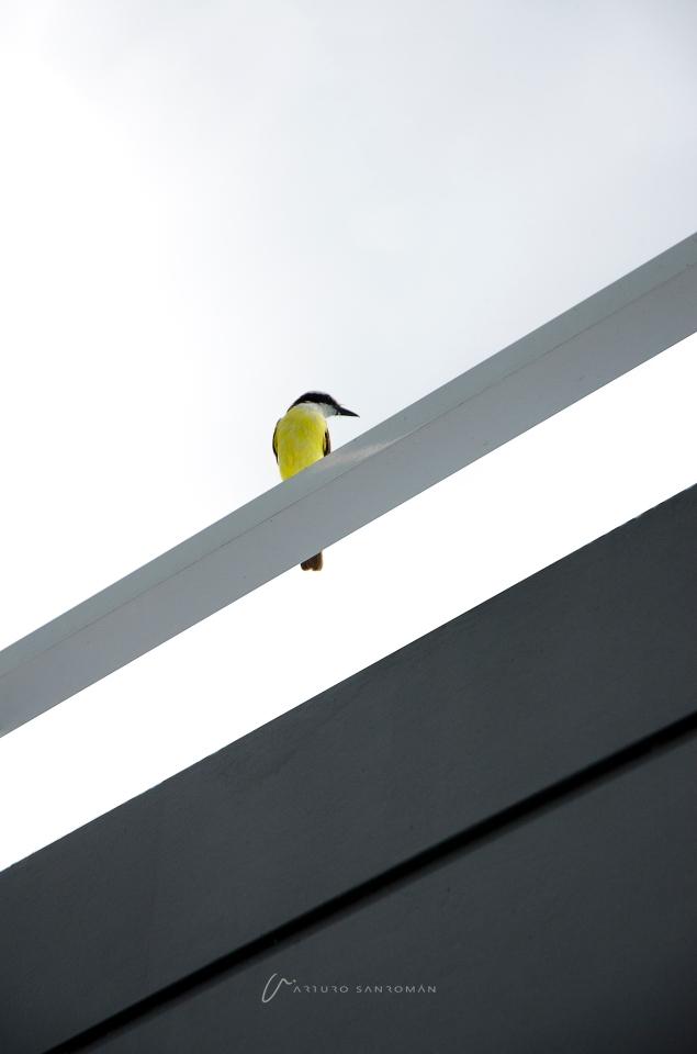 lineas-pintadas-de-amarillo